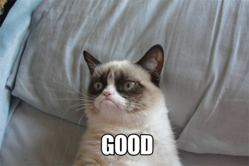 post-11150-Grumpy-Cat-GOOD-and-NO-memes-pGrc